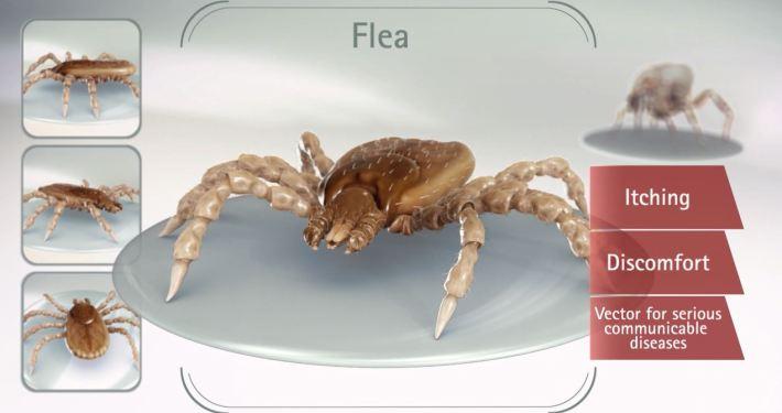 3D Parasite