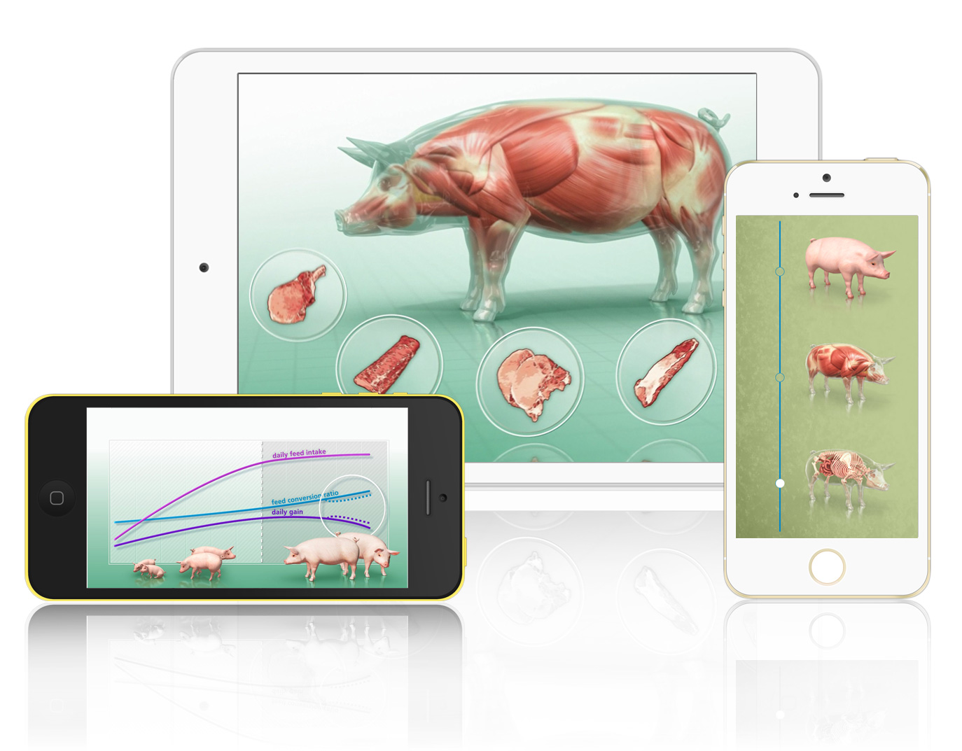 Swine Business Devices