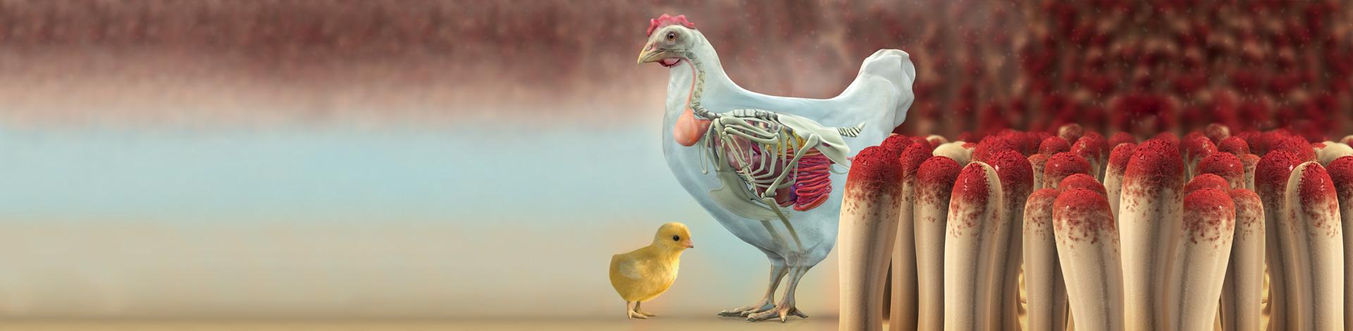 Slider Poultry Producers
