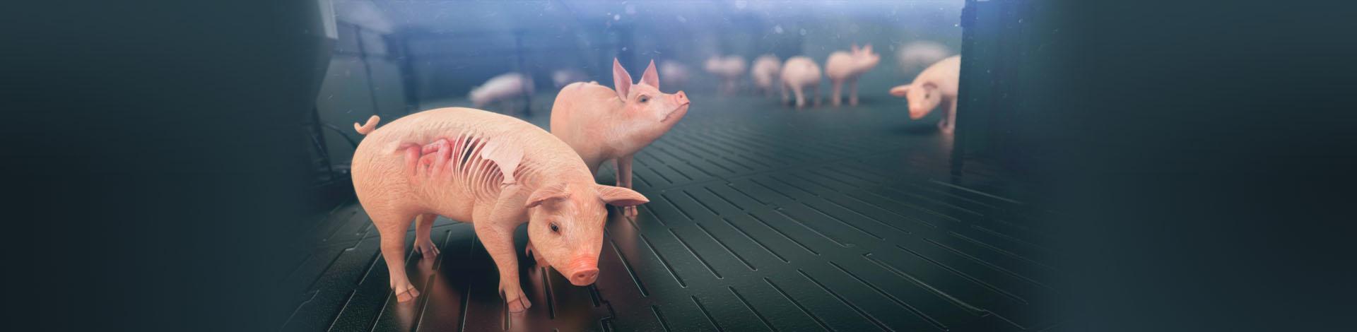 Slider Swine Veterinarians