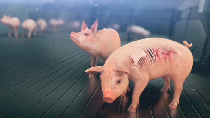 Case Study Solution in Swine Business Animation
