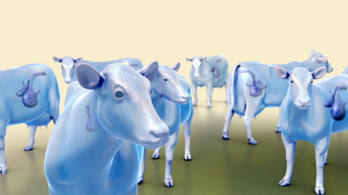 Project Bovine Viral Diarrhoea Animation