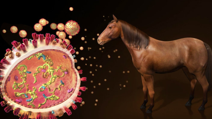 Project Horse Vaccine Animation