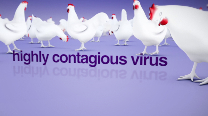 Project Vaccination in Poultry Animation
