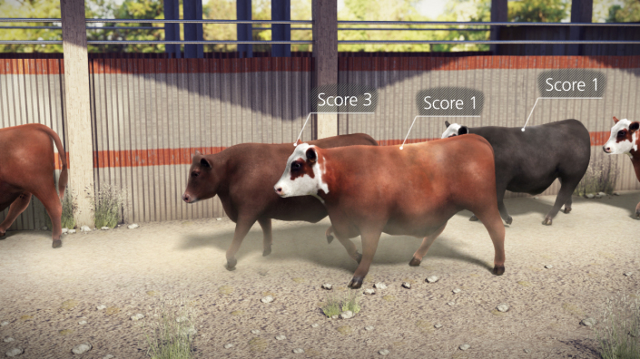 Project Cow Mobility Scores Animation