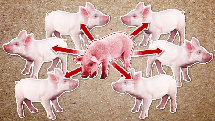 Project Pathogenic E.coli in Pigs Animation