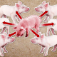 Project Pathogenic E.coli in Pigs Animation